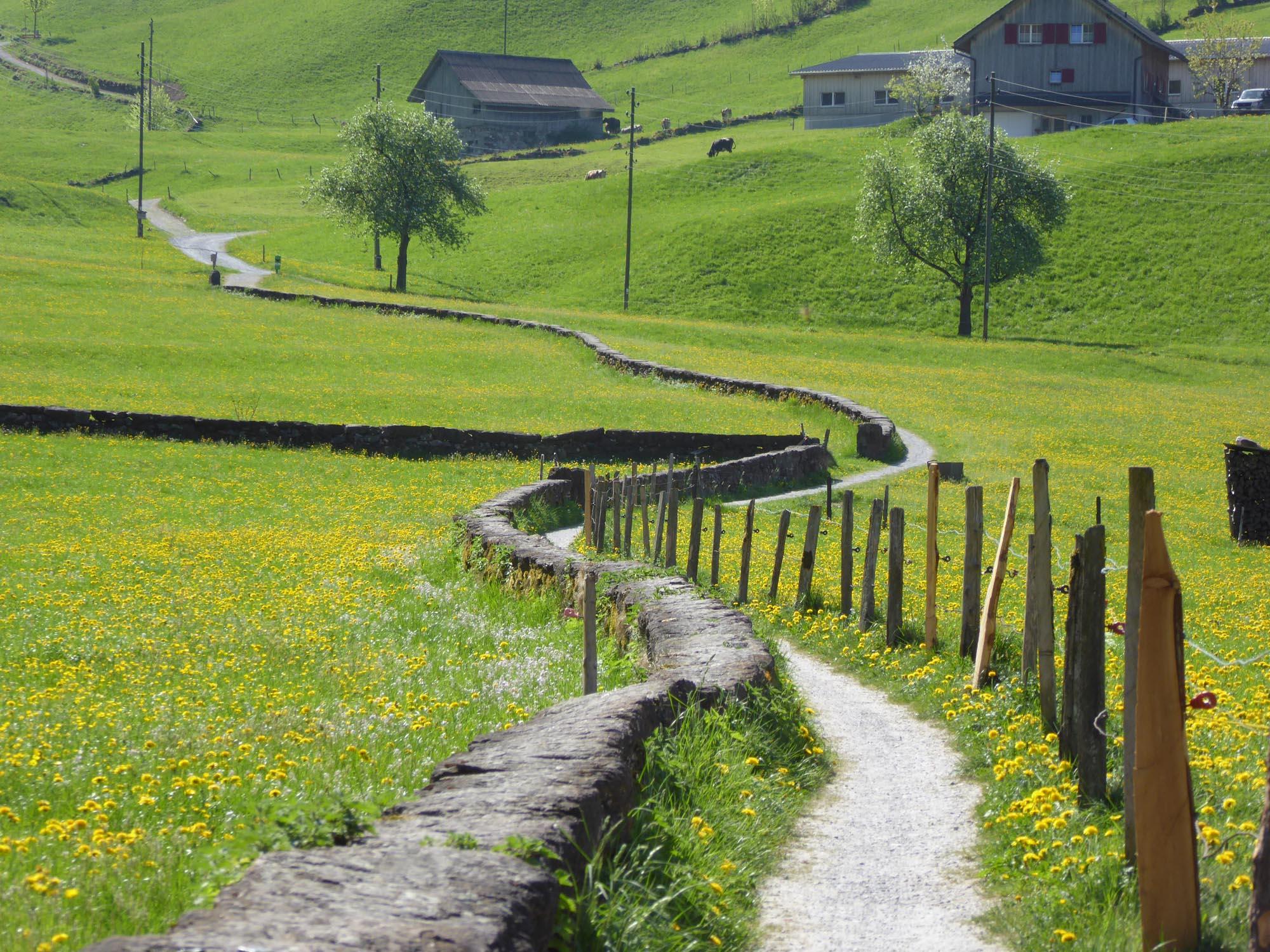 Landschaft planen Weg Weide